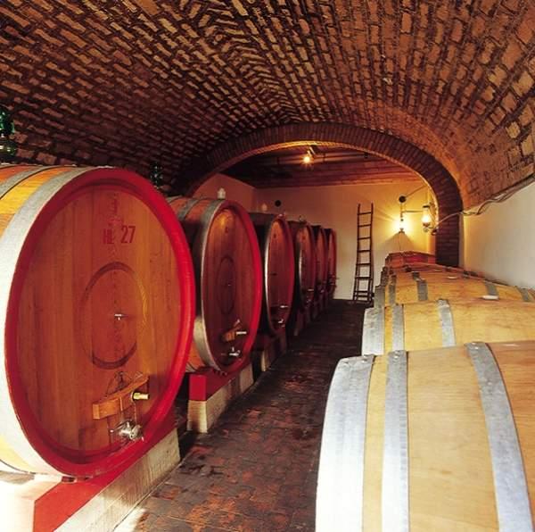 vinogradnik_v_toskane_02